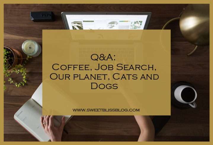 Q & A: Coffee, Job Search, Our Planet, Cats and Dogs – Sweet